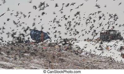 Dump (landfill)