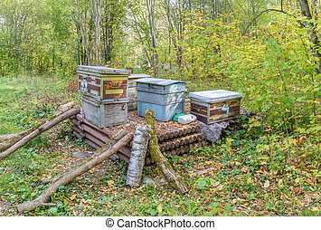 Dump of old wooden hives, abandoned in woods