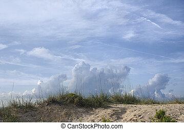 duna, con, playa, grass.