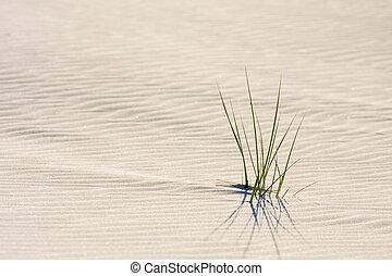 duna, en, playa, en, ocaso