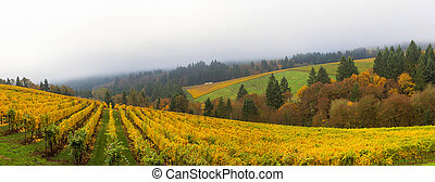 Dundee Oregon Vineyard During Fall Season Panorama