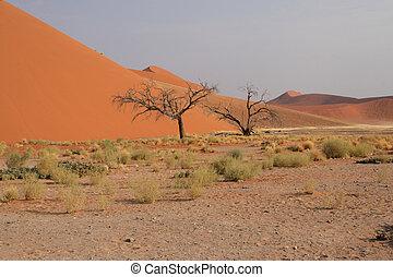 Dune 45 in the Namib Desert near Sossusvlei, Namibia