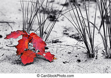 Dune and Leaf in Red - A single red leaf leans against the ...