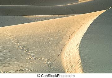 dune, dettaglio