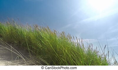 Dune Grass Moving - Slow Motion
