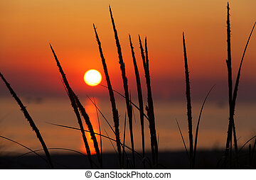 Beach grasses are silhouetted by the setting sun as it drops low over Lake Michigan in Ludington State Park