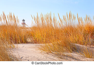 Dune Grasses with lighthouse in the distance