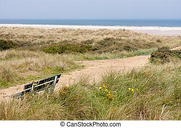 dune, olandese, spiaggia, costa