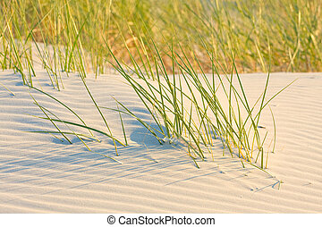 Dune on Beach at Sunset