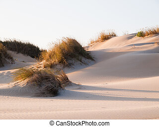 Dune on the beach