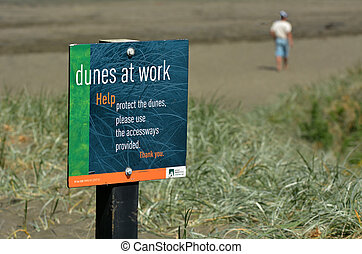 Dune restoration Muriwai beach New Zealand