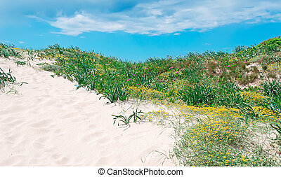 dune sand and green plants