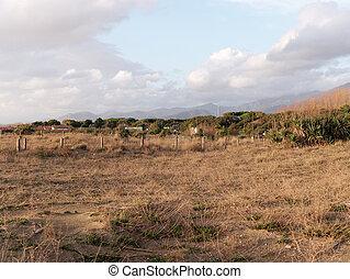 dune sand in forte dei marmi beach