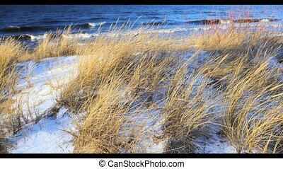 Dune scene with beach grass, snow