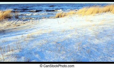 Dune scene with beach grass snow