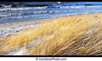 Dune scene with beach grass, snow
