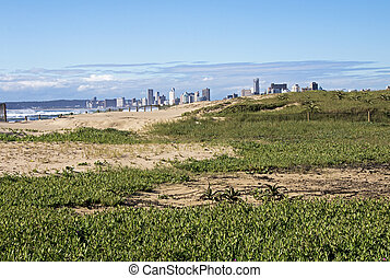 Dune Vegetation against Distant Durban City Skyline
