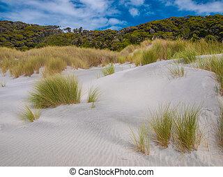 Dune Vegetation at Wharariki Beach