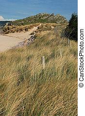 Dune with marram grass