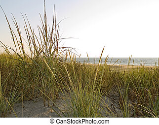 Dunes and Grasses
