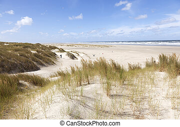 dunes and view over north sea on the island of vlieland in the netherlands