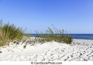 Dunes at the Baltic Sea coast in Jurata in Poland