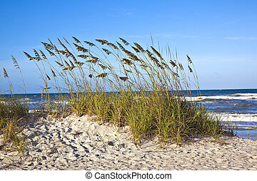 dunes at the beautiful beach in Sankt Augustine