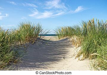 dunes, grass., sable plage, marram