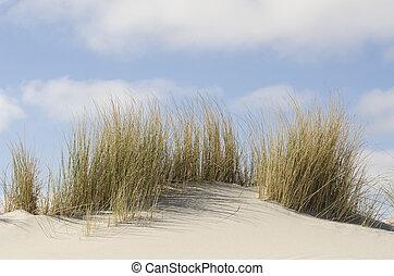 dunes, herbe, marram