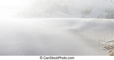 Dunes in sun light on the shore of the Baltic Sea. Beach...