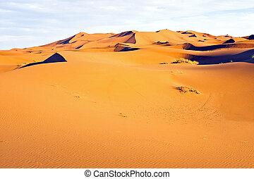 Dunes in the Sahara desert from Morocco