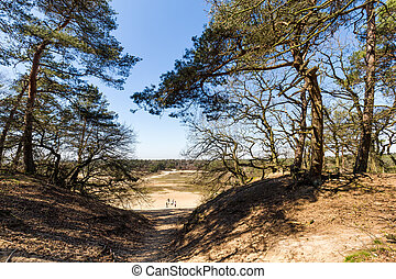 Dunes landscape on a sunny day in National Park Hoge Veluwe in the Netherlands. One of the major Dutch NP.