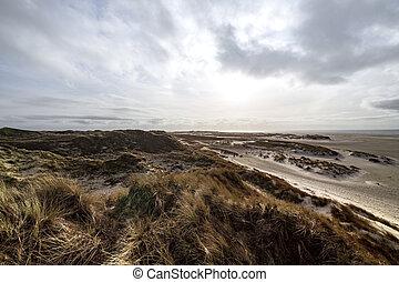 dunes, marram, robuste, sable, côtier, herbe