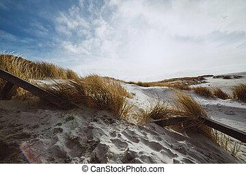 dunes, marram, robuste, sable, primitif, blanc, herbe