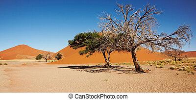 Namib Desert - Dunes of Namib Desert, Sossufley, Namibia
