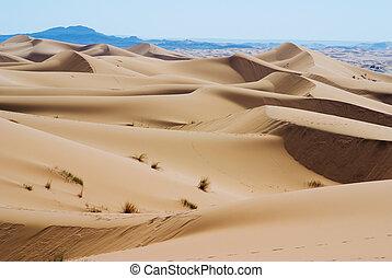 dunes of the desert