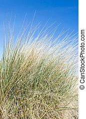 dunes, sable, herbe, côtier, marram