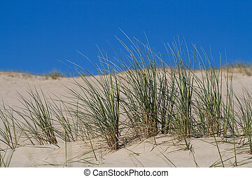 dunes, sable, herbe, plage