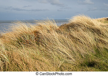 Dunes with beachgrass in spring at the island of Sylt in ...