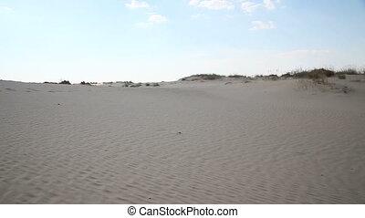 Dunes with vegetation in the desert