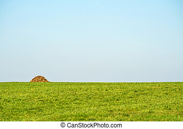 dung hill on a green meadow