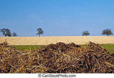 dung hill