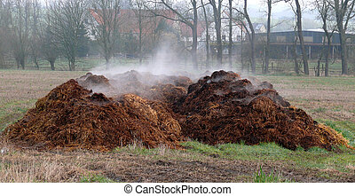 dung from horse