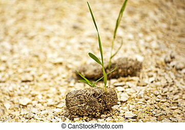 dung with seedling