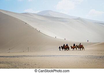 dunhuang, 11:, grupo de turistas, ser, equitación, camellos, en, el, mingsha, shan, desierto, un, parte de, camino de seda, en, marzo, 11, 2016, en, dunhuang, china.