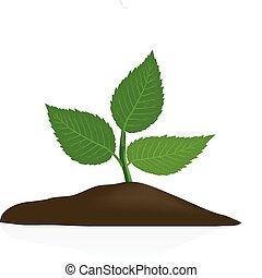 dunkel, gartenerde, pflanze, junger, freigestellt