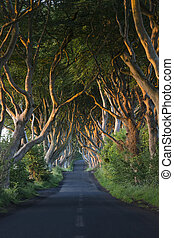 dunkel, nördlich , hecken, -, grafschaft, antrim, irland