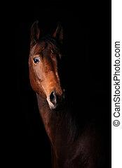 dunkel, pferd