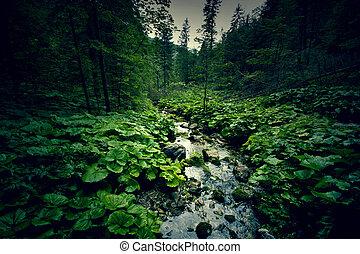 dunkel, river., grüner wald