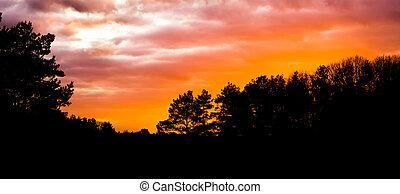 dunkel, silhouette, von, a, wald, landschaftsbild, an, sonnenuntergang, sonnenuntergang, geben, a, bunte, glühen, in, der, himmelsgewölbe, und, wolkenhimmel